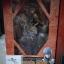 Selvaria Bles Vertex thumbnail 1